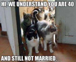 40-and-still-not-married-cat-memes_0