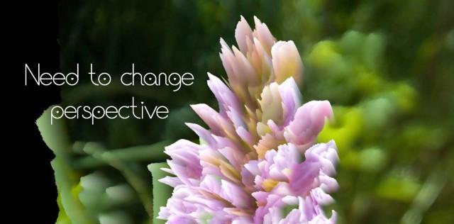 wild orchid 3d photo manipulation