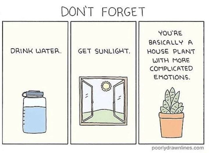 Comic saying: Don't forget, Drink water, Get Sunlight, You are basically a house plant with more complicated emotions