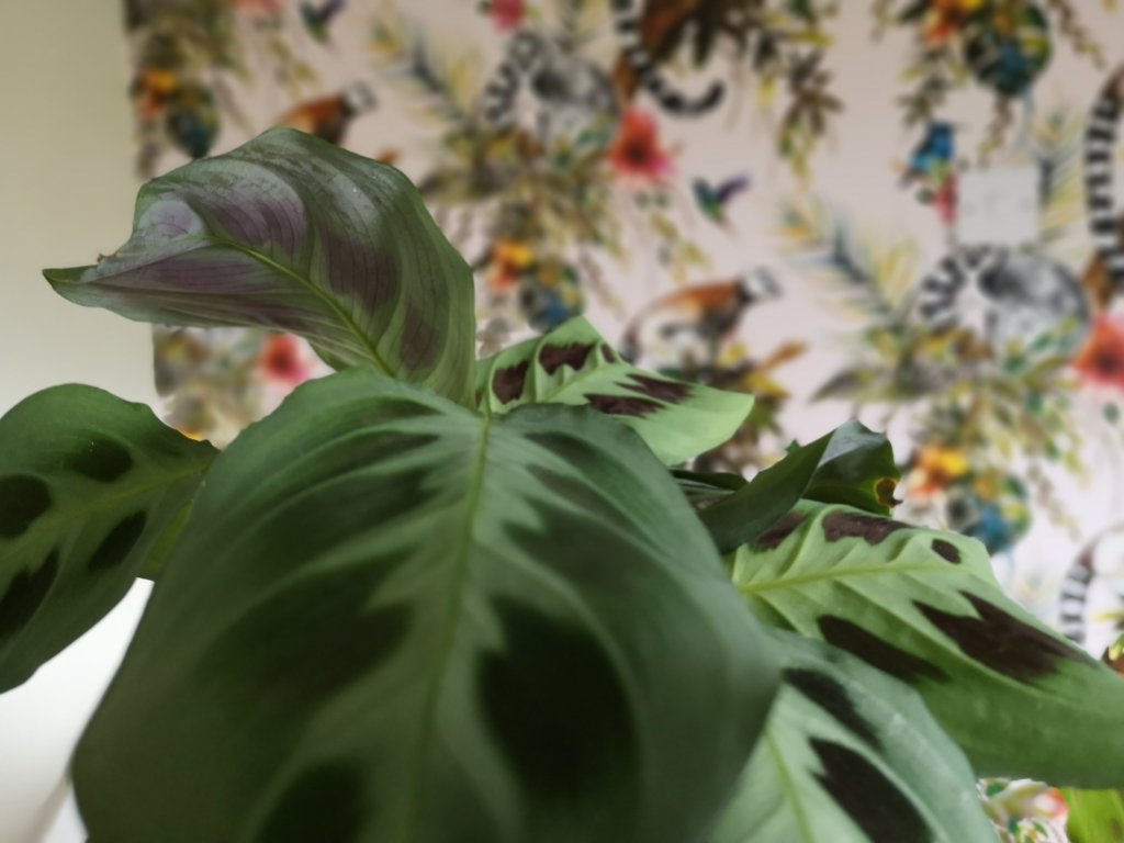 Close up of green plant with colourful wallpaper in background