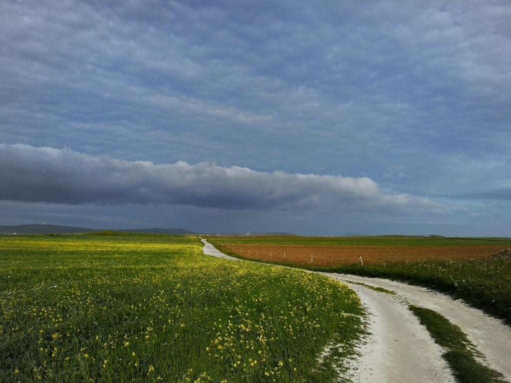 a sandy path leading through wild flower meadows