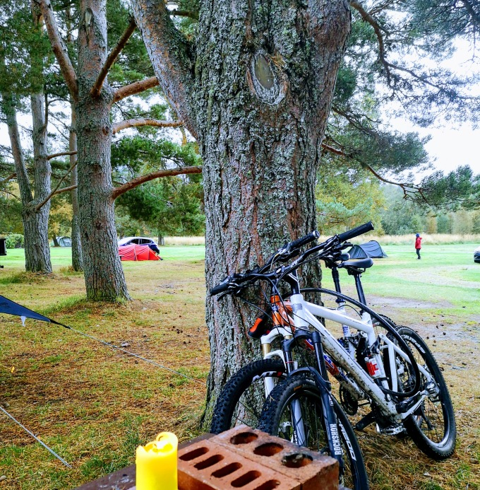 two mountains bikes leaning against a pine tree on a camp ground