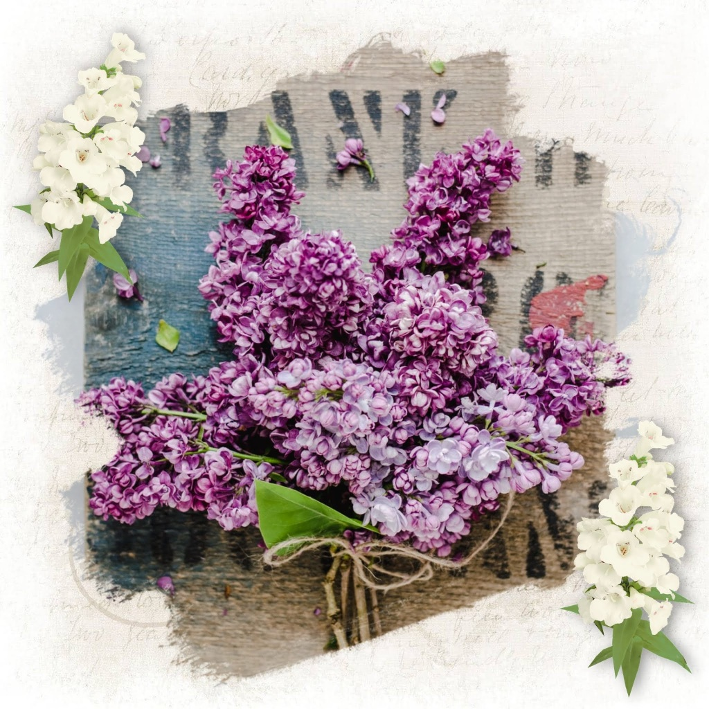 This image is a collage of purple lilac flowers with some white flowers (they look like white foxglove) to the bottom left and top right of the square image. The background is scraps of vintage paper.
