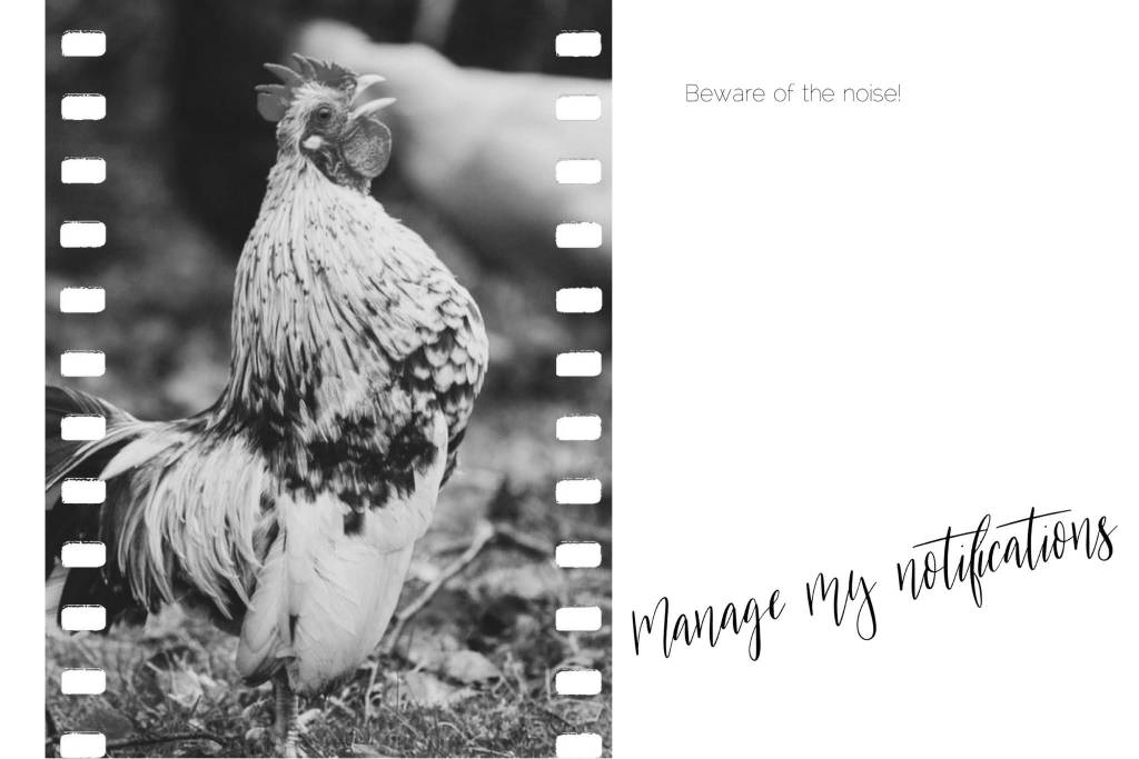 black and white image of a cockerel crowing out loud. The writing says Beware of the noise. Manage my notifications